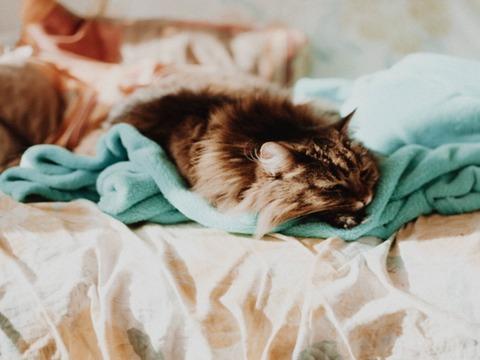 猫と人間が快適に一緒に寝られる布団