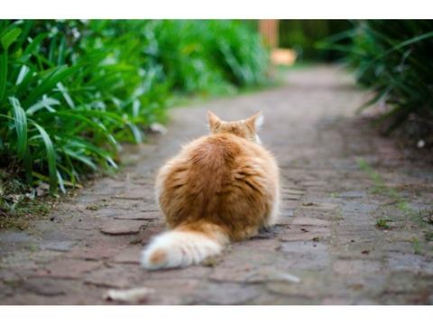 猫にはめる爪切り用グローブ