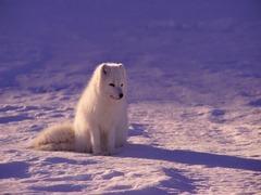 犬と同じ景色を見ることができる眼鏡