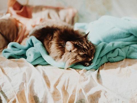 猫の毛が入ってこない服