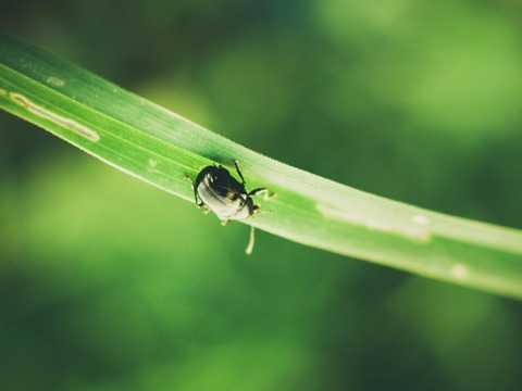 虫が絶対に寄ってこない芳香剤