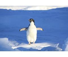 ファーストペンギンが集まるサイトサービス