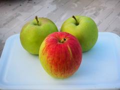 りんごの美味しん季節が待ち遠しい