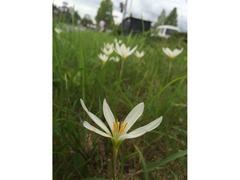 なんという花でしょうか