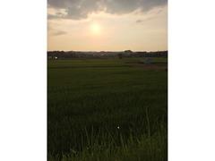 夕日の照らす田園にて 北ノ堂