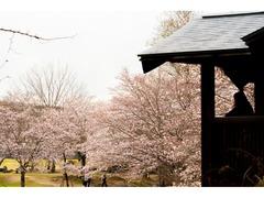 桜 けいはんな記念公園