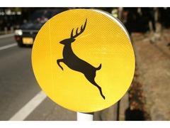 「鹿に注意」の道路標識