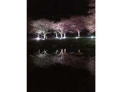 別府公園 桜